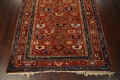 Pre-1900 Antique Vegetable Dye Sultanabad Persian Area Rug 5x10 image 8
